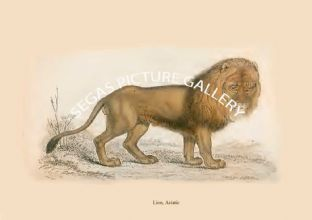 Lion, Asiatic